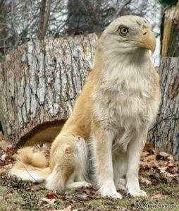 Serigala dengan Elang